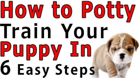 how to potty train puppy